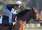 Beholder, Stellar Wind Nearing First Works