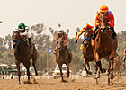 Small Field Greets Iotapa in Hollywood Oaks