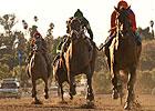 Beholder Dominates Foes in Zenyatta Stakes