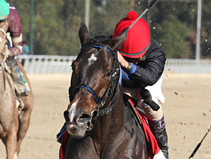 Bella Medaglia wins the 2012 Treasure Chest.