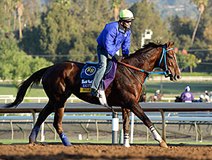 Belle Gallantey - 2014 Breeders' Cup.