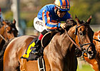 Belle Royale Retired, Sold to Japanese Farm