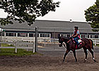 Panel: Need for Equine Liability Law in NY