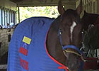Belmont: Social Inclusion Walks the Shedrow