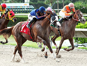 Beloveda wins the Tropical Starter Series Stakes.