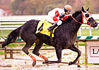 Ben's Cat Grabs Off-the-Turf Laurel Dash
