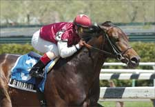 Steve Haskin's Preakness Analysis: Can Barbaro Get 'Berned?'