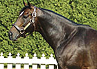 Castleton Lyons Stallion Bernstein Dies