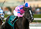 Bettys Bambino Wins Daytona in Stakes Debut