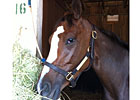 Summer Applause Laying Low for KY Oaks