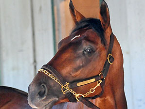 Belmont Doings: The Big Brown