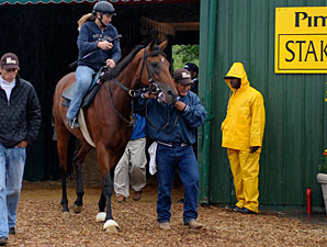 Big Brown at Pimlico May 16.