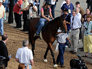 Haskin Preakness Report: Brown's in Town