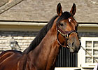 Big Brown Settles in at Three Chimneys