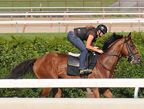 Big Brown works on the Aqueduct turf on August 1.