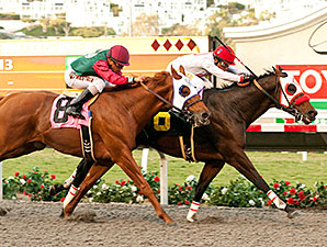 Big Macher wins the Cary Grant Stakes.