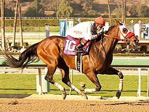 Big Macher wins the 2014 California Cup Sprint Stakes.