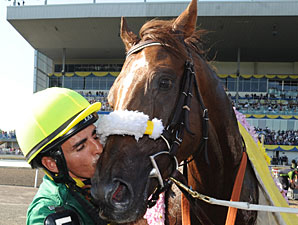Autumn Stakes Lures Plate Winner Big Red Mike