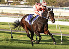 Black Caviar Wins Again; Royal Ascot Next
