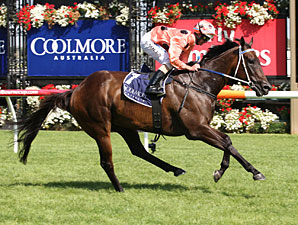 Black Caviar to Run in Sportingbet Sprint
