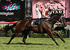 Unbeaten Black Caviar Sets Record in Comeback