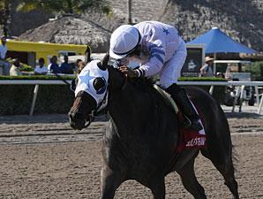 Black Diamond Cat wins the 2013 Montbrook.