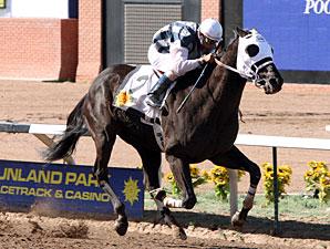 Black Hills wins the 2011 Sunland Park Handicap.