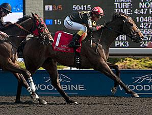 Black Hornet wins the Vigil Stakes.