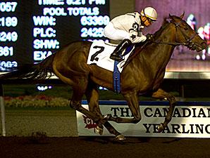Black Hornet wins the 2014 Kenora Stakes.