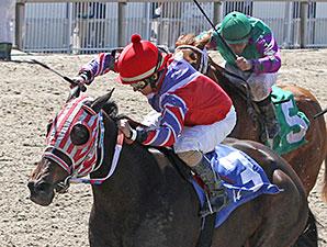 Blading Wild Cat wins the 2014 Crescent City Oaks.