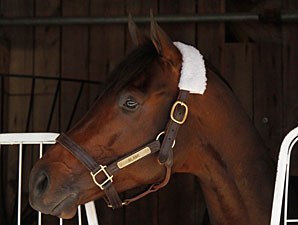 Blame at Churchill Downs on Oct. 27, 2010.