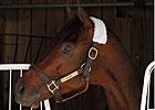 Featured Horse Profile: Blame