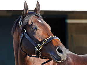 New Stallions Making Mark at Keeneland Sale