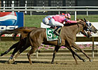 Blind Luck to be Sold at Keeneland November