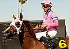 Blind Luck Works Four Furlongs at Hollywood