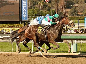 Blingo wins the 2014 San Antonio Stakes.