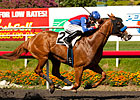 Steady Blueskiesnrainbows Wires Swaps Stakes
