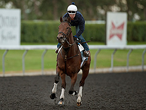Bobby's Kitten - Woodbine, September 12, 2014.