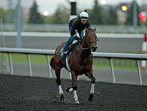 Bobby's Kitten - Woodbine, September 13, 2014.