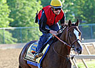 Bodemeister Still Heavy Preakness Favorite