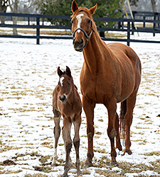 Mining My Own Produces Bodemeister Filly