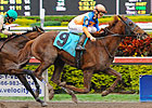 Bowman&#39;s Causeway Florida Derby Bound