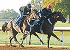 Bradester Preps for BC Dirt Mile at Keeneland