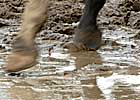 Racing Officials, Trainers Prepare for Wet Breeders&#39; Cup 