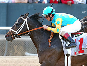 Brewing wins the 2014 Bachelor Stakes.