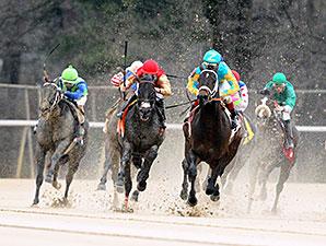 Brewing wins the 2014 Gazebo Stakes.