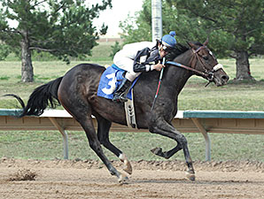 Bridlewood Angel wins the 2014 Spicy Stakes.