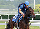 Haskin&#39;s Belmont Report: Bred Brilliantly