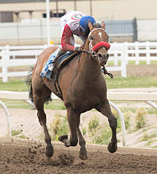 Broadway Empire Heads Packed Canadian Derby