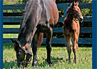 Vote for the MarketWatch Broodmare of 2011